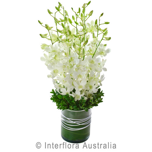 White Orchid Vase Cottage Garden Flowers Gifts